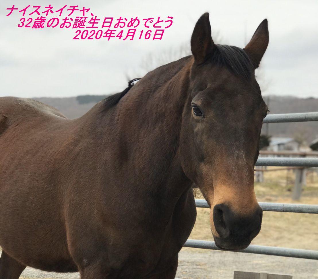 ナイスネイチャ、お誕生日おめでとう!!|渡辺牧場だより|引退馬協会